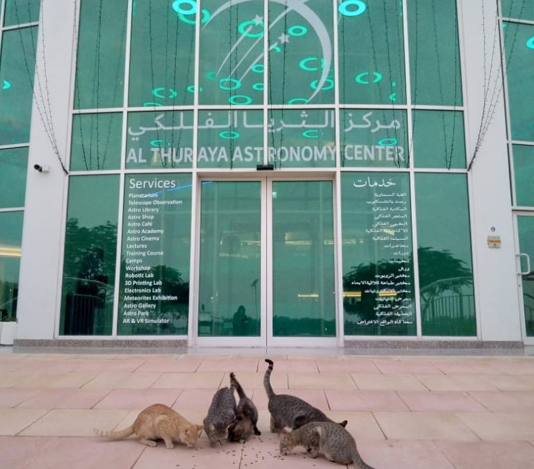 Pet Cats Welcome Guests to Al Thuraya Astronomy Center